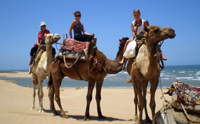 Camel riding on the beach - Morocco